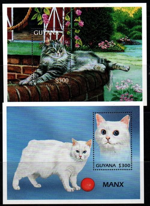 guyana-trade-6.jpg
