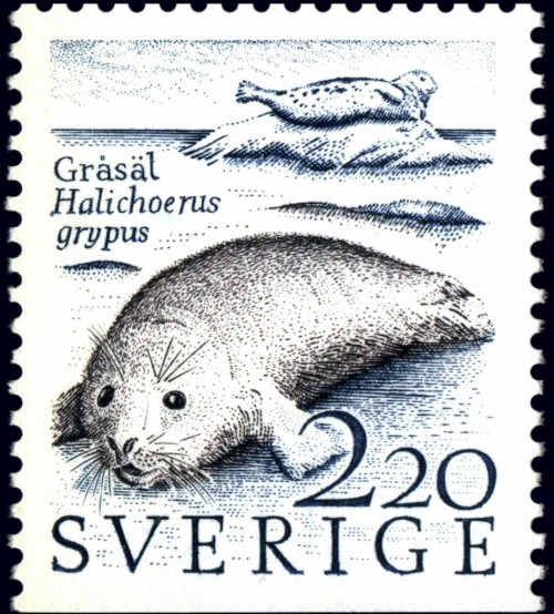 Grey-Seal-Halichoerus-grypus.jpg