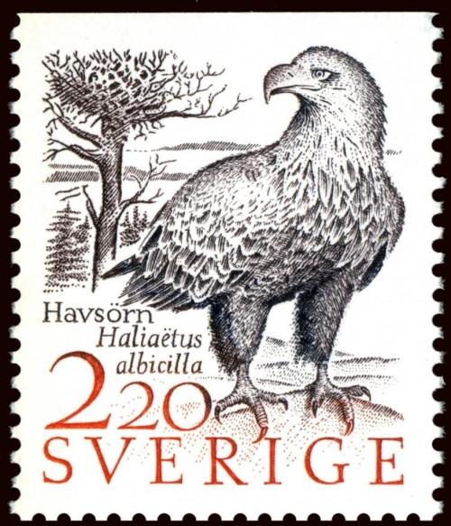 White-tailed-Eagle-Haliaeetus-albicilla.jpg