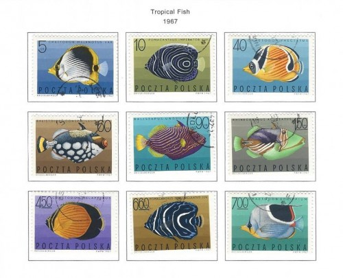 tropical-fish-1967-poland-stamps.jpg